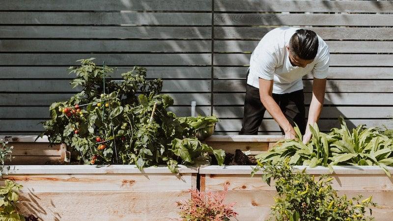 allotme-gardening